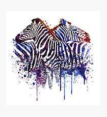 Zebras in Love Photographic Print