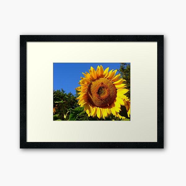 Keep Your Face to the Sun Framed Art Print