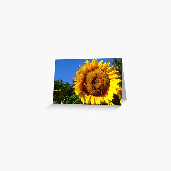 Keep Your Face to the Sun Greeting Card