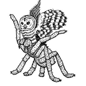 Tarantulowl - a Tarantula/Owl Hybrid by missdemeanor