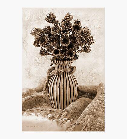 Globe Cornflower Seed Heads Photographic Print