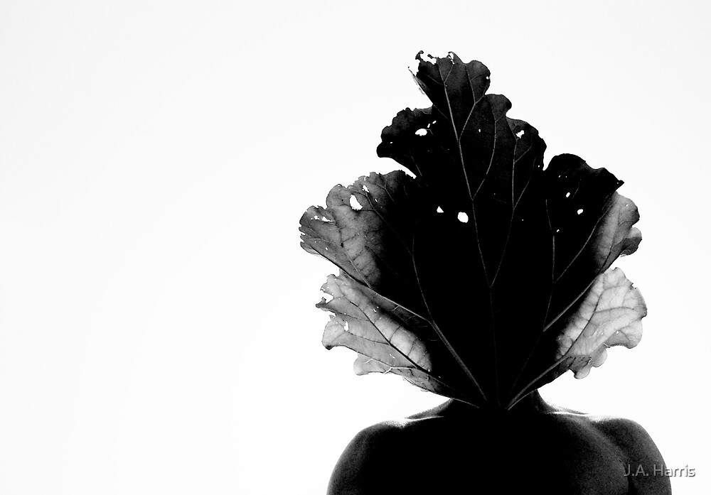 'Flora Sapien' by J.A. Harris