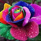 RAINBOW ROSE IN THE RAIN by WhiteDove Studio kj gordon