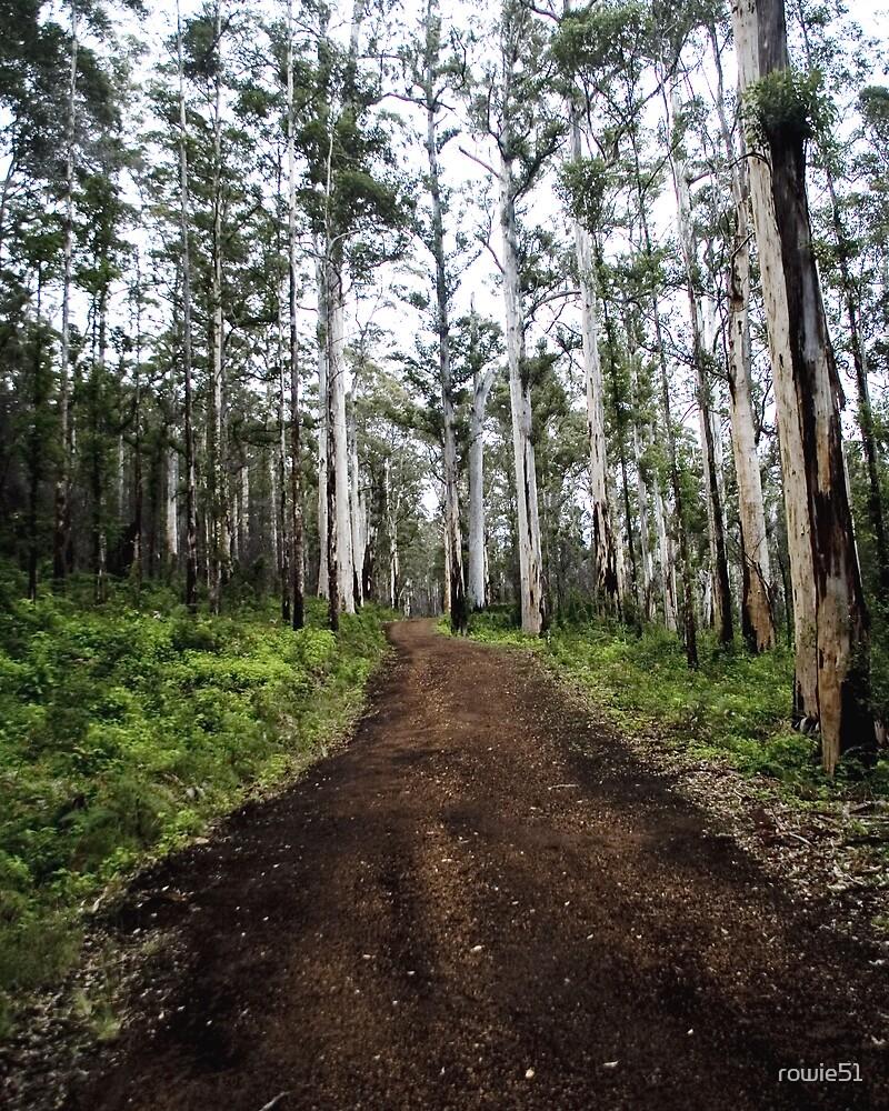 Karri Forests Porongurups WA by rowie51