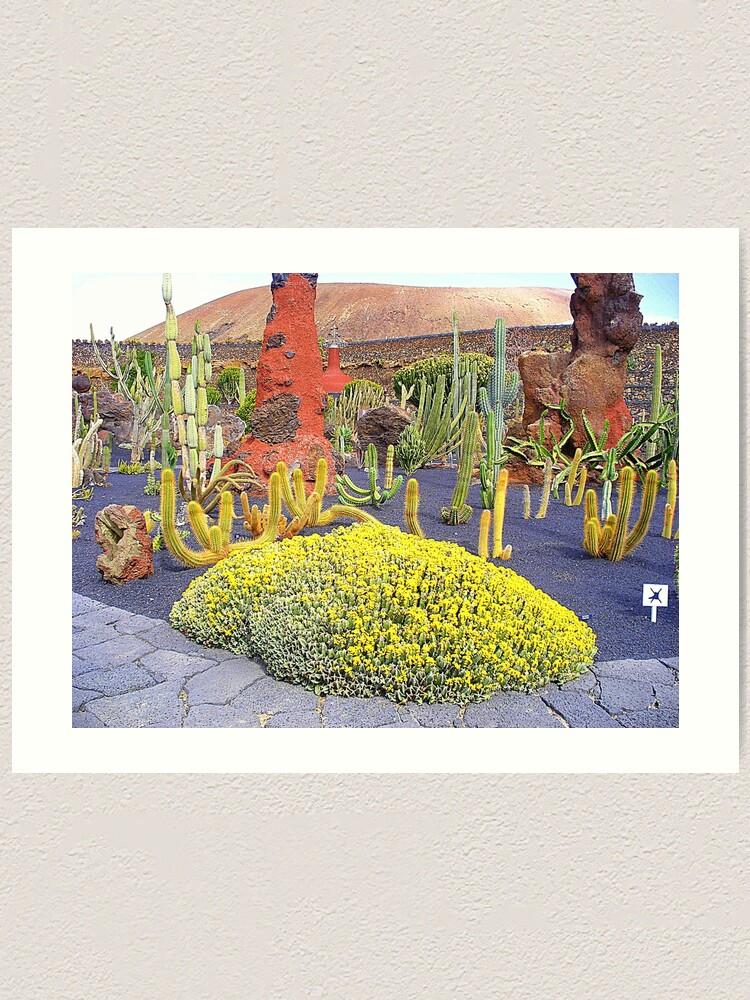 Natural Cactus Garden Designs on cactus seattle, cactus for north texas, cactus books, cactus planting ideas, cactus border, cactus gardening tips, cactus painting, cactus cuttings, cactus wedding, cactus backyard ideas, cactus with snow, cactus that flower, cactus graphic, cactus information, cactus in bloom, cactus wooden raised bed, cactus wood, cactus front gardens, cactus fencing, cactus park,