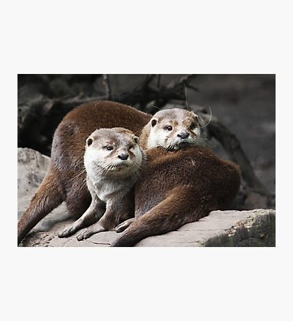 Oriental small-clawed otter Photographic Print