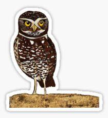 Burrowing Owl Sticker