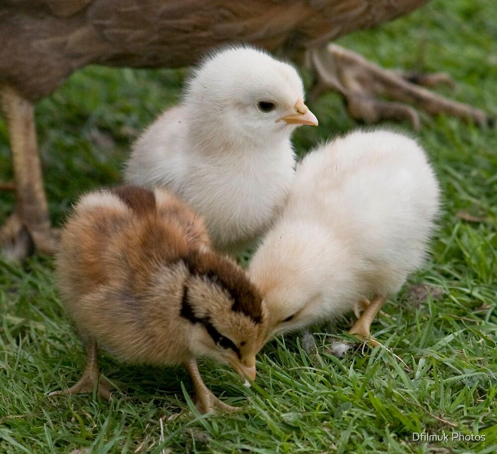Chicks by Dfilmuk Photos