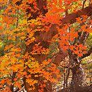 Peak Color by Tamas Bakos