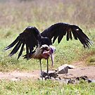 Marabou Stork Just Landing by Carole-Anne