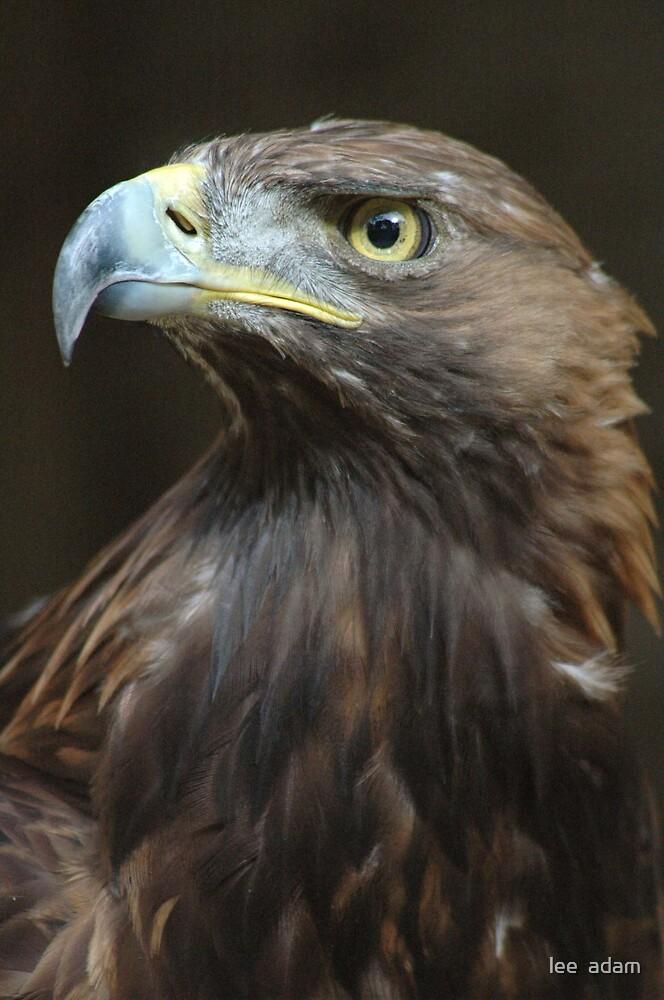 Eagle eye by lee  adam