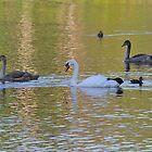 Mute Swan and Two Cygnets by Linda Crockett