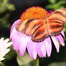 Spread your Wings by Terri~Lynn Bealle