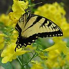 Butterfly in the Esperanza by Cathy Jones