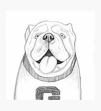 Sketch Bulldog Photographic Print