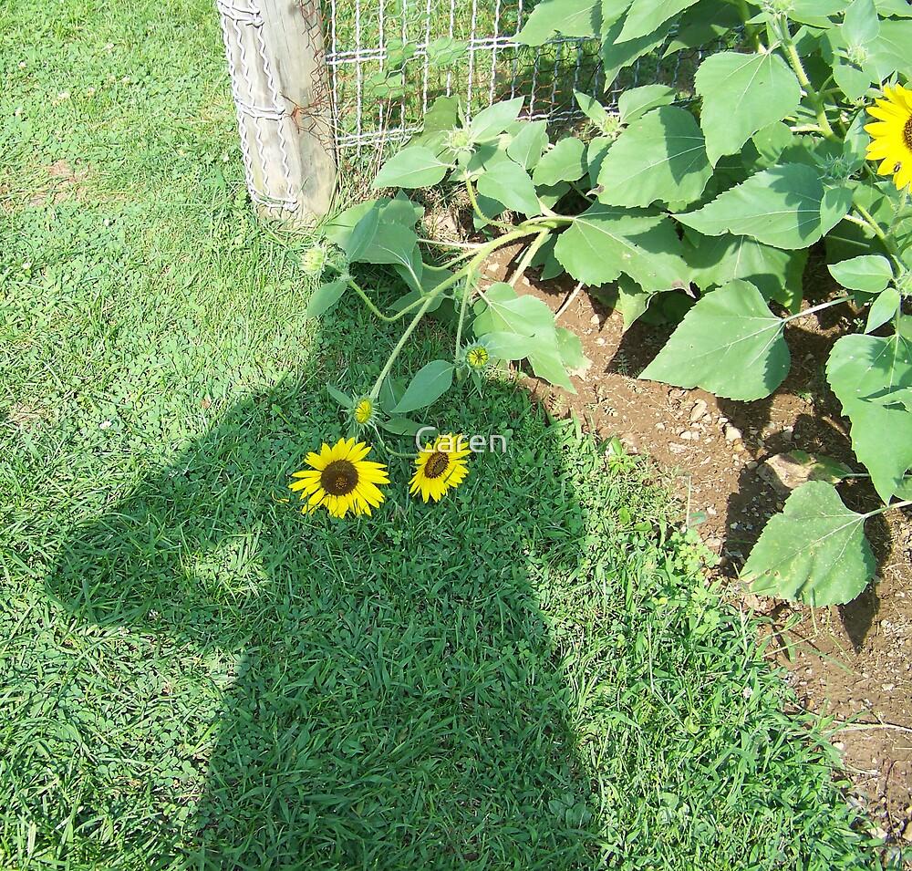 Nice Sunflowers. by Caren