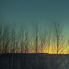 Sunset through the trees by rom01