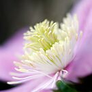 Clematis 1 by Brian Haslam