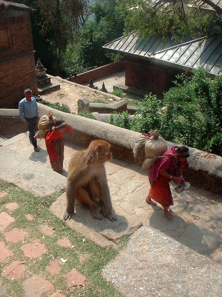 Monkey at Sanku Tenple by desertman