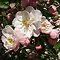 *AVATAR/Flowering Tree-Gorgeous Flower Cards*