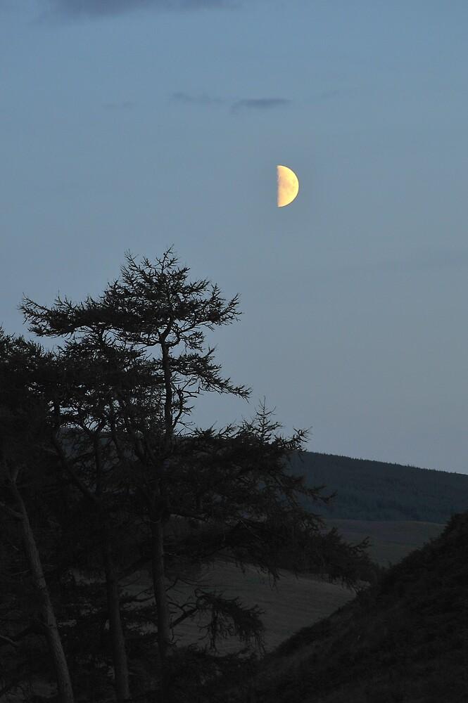 Half Moon by photobymdavey