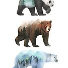 bears by colorsofthewild