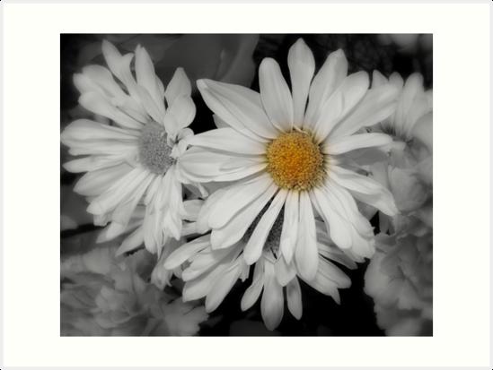 Daisy Wonderful by Renee Rorrer