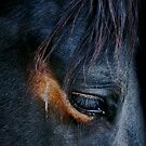 Equine Abstract by Sue  Cullumber