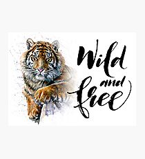Tiger Wild and Free Photographic Print