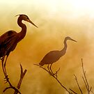 Dawn's Awakening by Sue  Cullumber