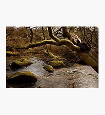 Healing Streams Photographic Print