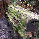 Mossy Log by sh3ll