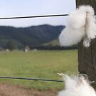 Staples on wire fence. by Barbara Caffell