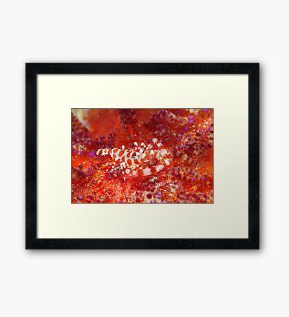Baptism Of Fire Framed Print
