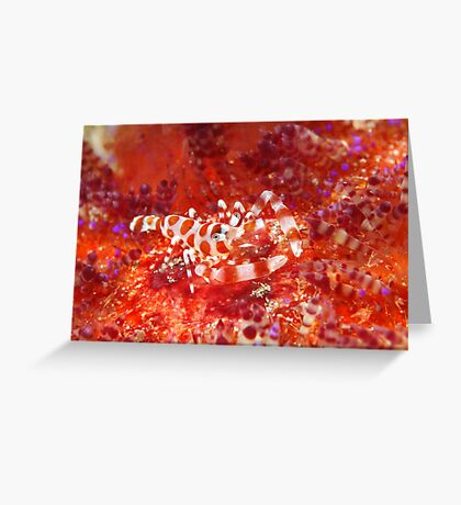 Baptism Of Fire Greeting Card