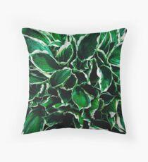 Hosta undulata albomarginata vibrant green plant leaves Throw Pillow