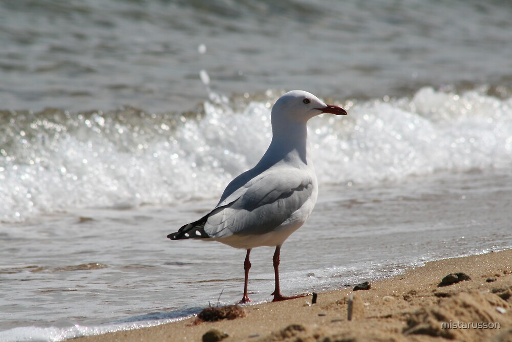 Seagull by mistarusson