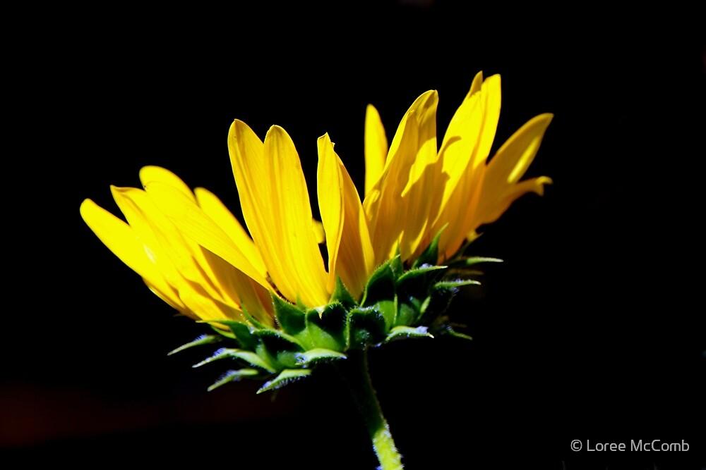 Sunny Yellow by © Loree McComb