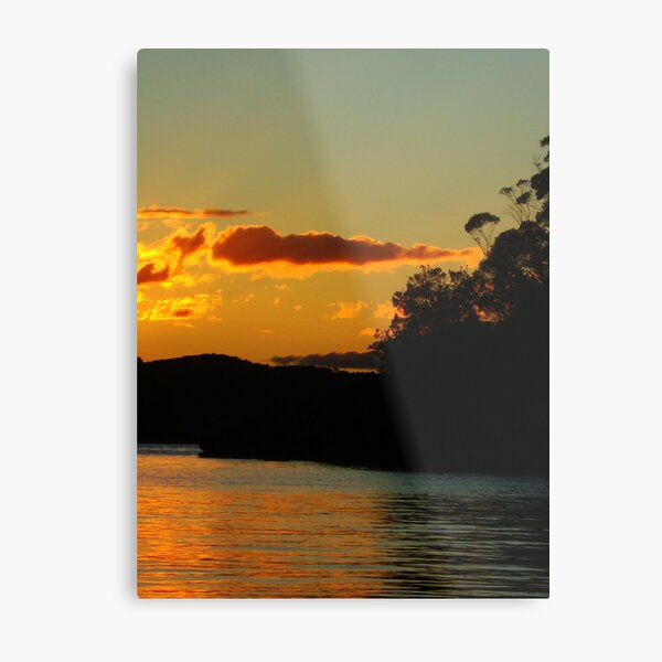 Black trees and sunlight Metal Print