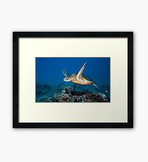 Icon of the Reef Framed Print