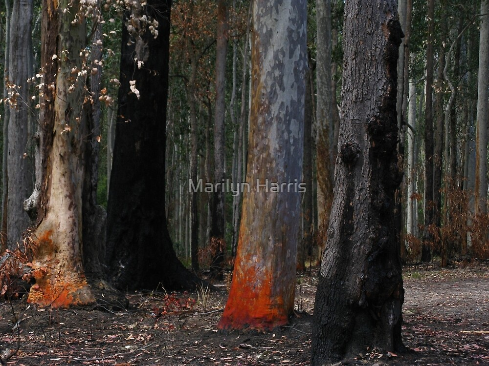 Colours of Burnt Trees - Murramarang National Park by Marilyn Harris