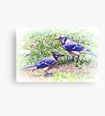Blue Jays Canvas Print