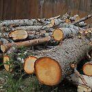 Sleeping Like a Log(s)  by John  Kapusta
