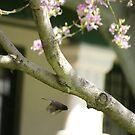 Spring, Neff Park, La Mirada, CA USA by leih2008