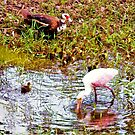 Spoonbill and ducks by ♥⊱ B. Randi Bailey