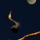 Moonlight Sonata by Sue  Cullumber