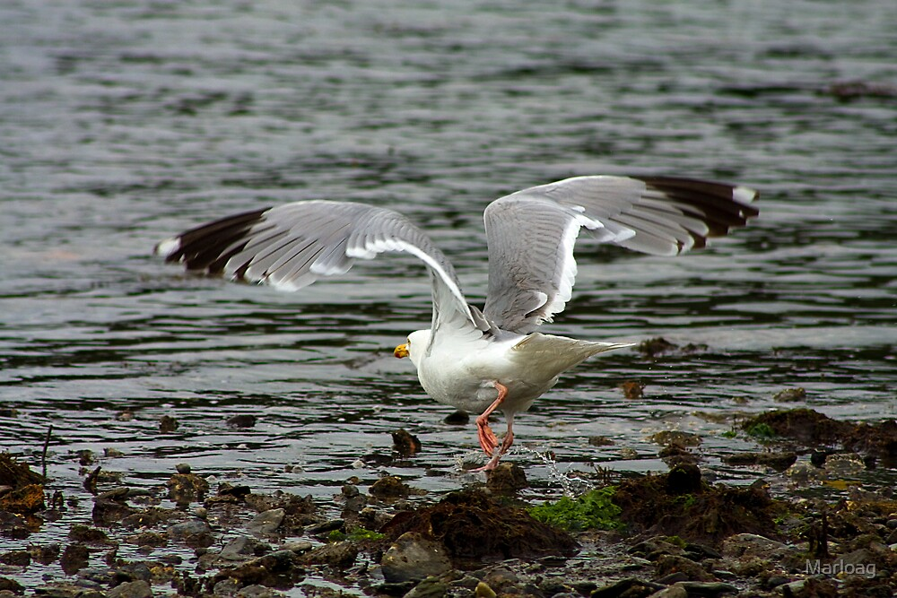 Gull Wing by Marloag
