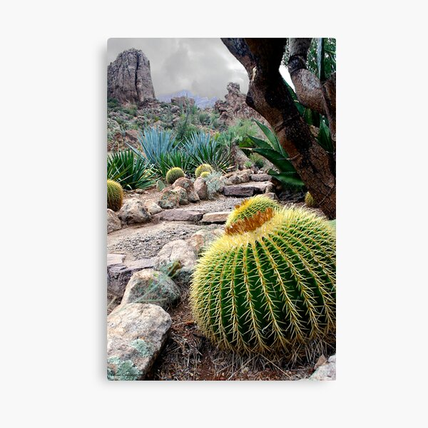 Desert Color Canvas Print