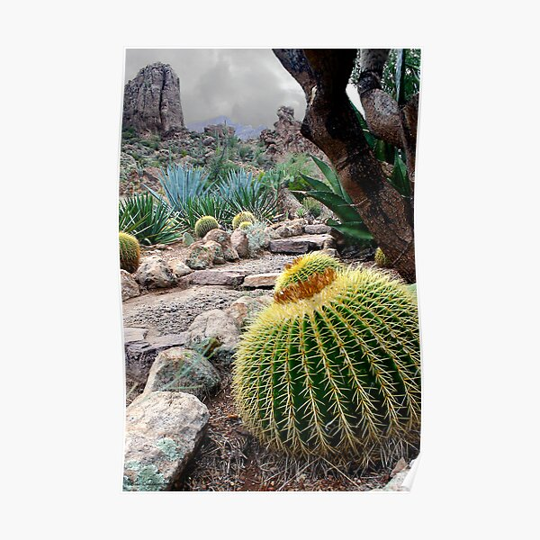 Desert Color Poster