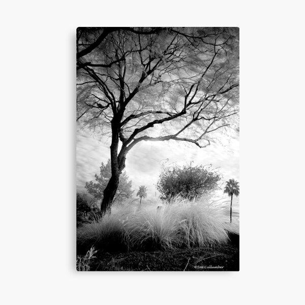Under the Shade Tree Canvas Print
